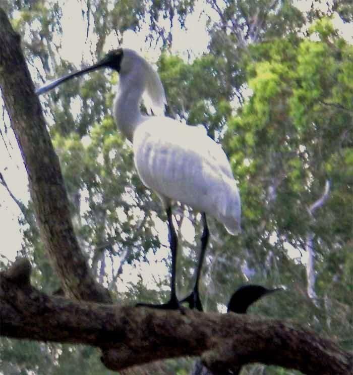 Hiliards creek fishing in suburban Brisbane Bird-