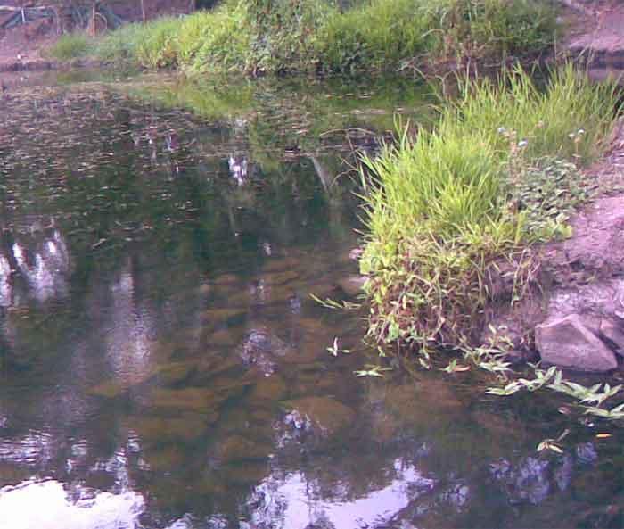 Hiliards creek fishing in suburban Brisbane Creek-1