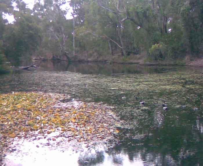 Hiliards creek fishing in suburban Brisbane Creek-2
