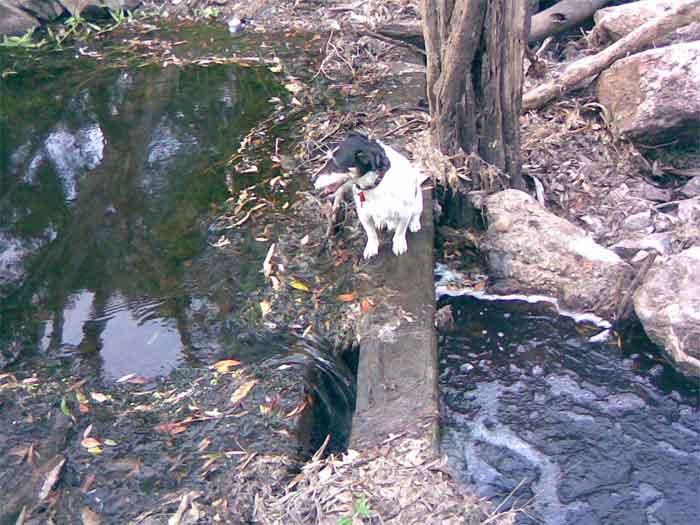 Hiliards creek fishing in suburban Brisbane Creek-4