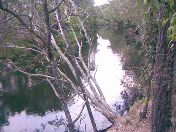 Hiliards creek fishing in suburban Brisbane Creek-8