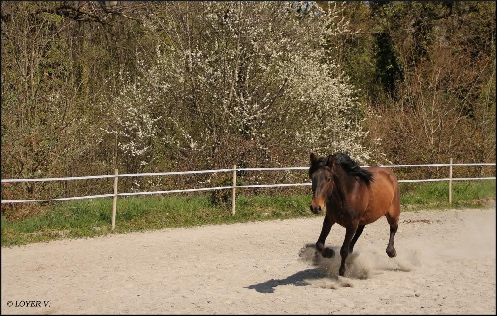 "Concours : ""cheval au galop"" GAGNANTE : TItâne IMG_4305"