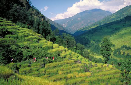 அழகான நெல் வயல்கள்2 - Page 4 NepalPaddyfields