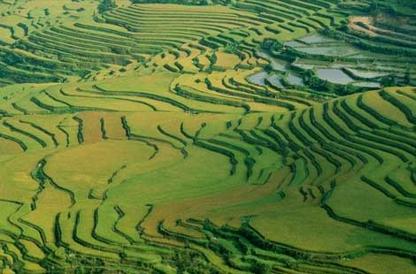 அழகான நெல் வயல்கள்2 - Page 4 RiceterraceIndia