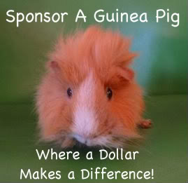 Sponsor A Pig!