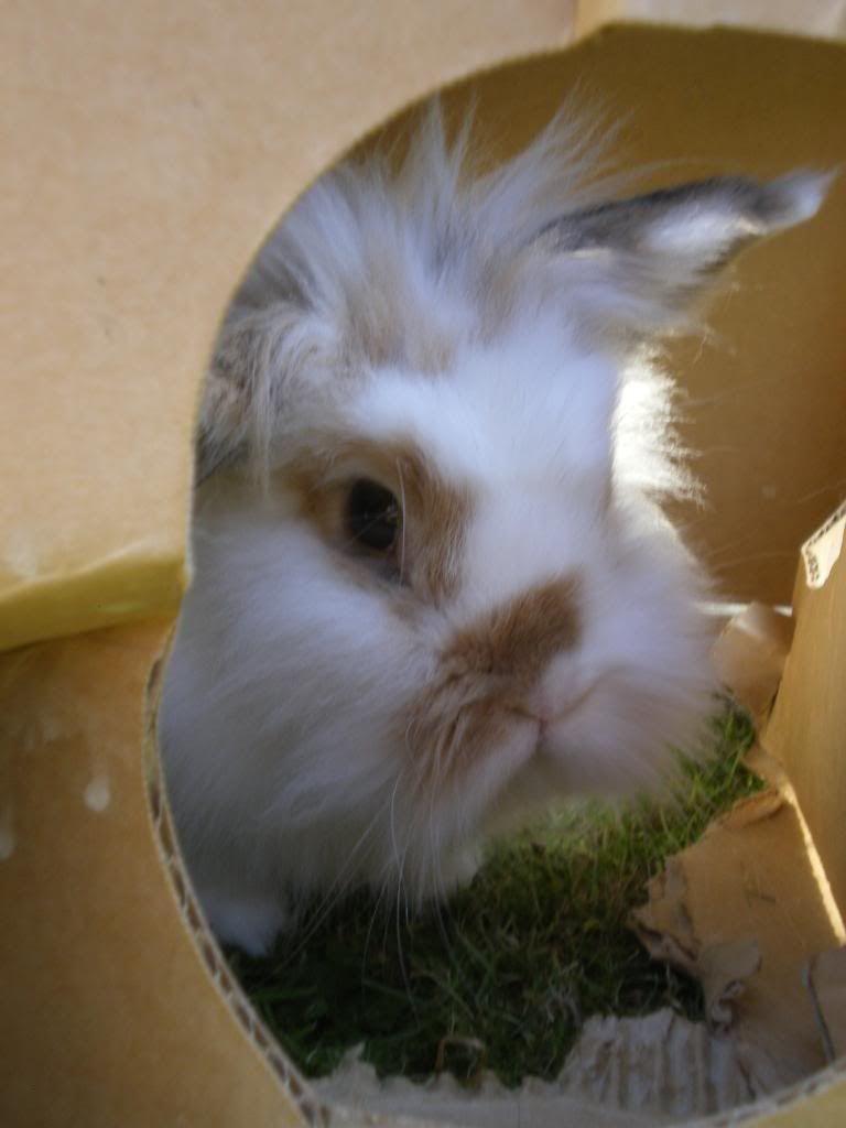 Noo (Nia) - 21st May 2012 Rabbits-09092024