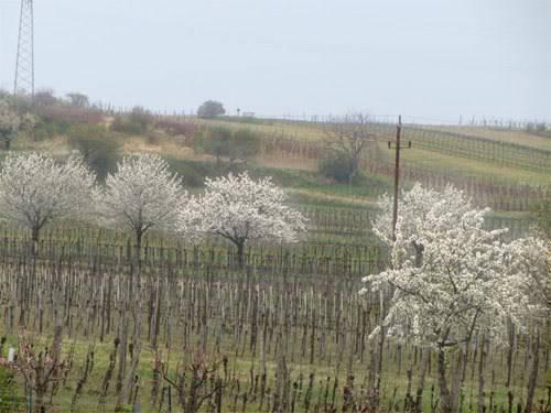 Endlich Frühling.... - Seite 3 W_58369