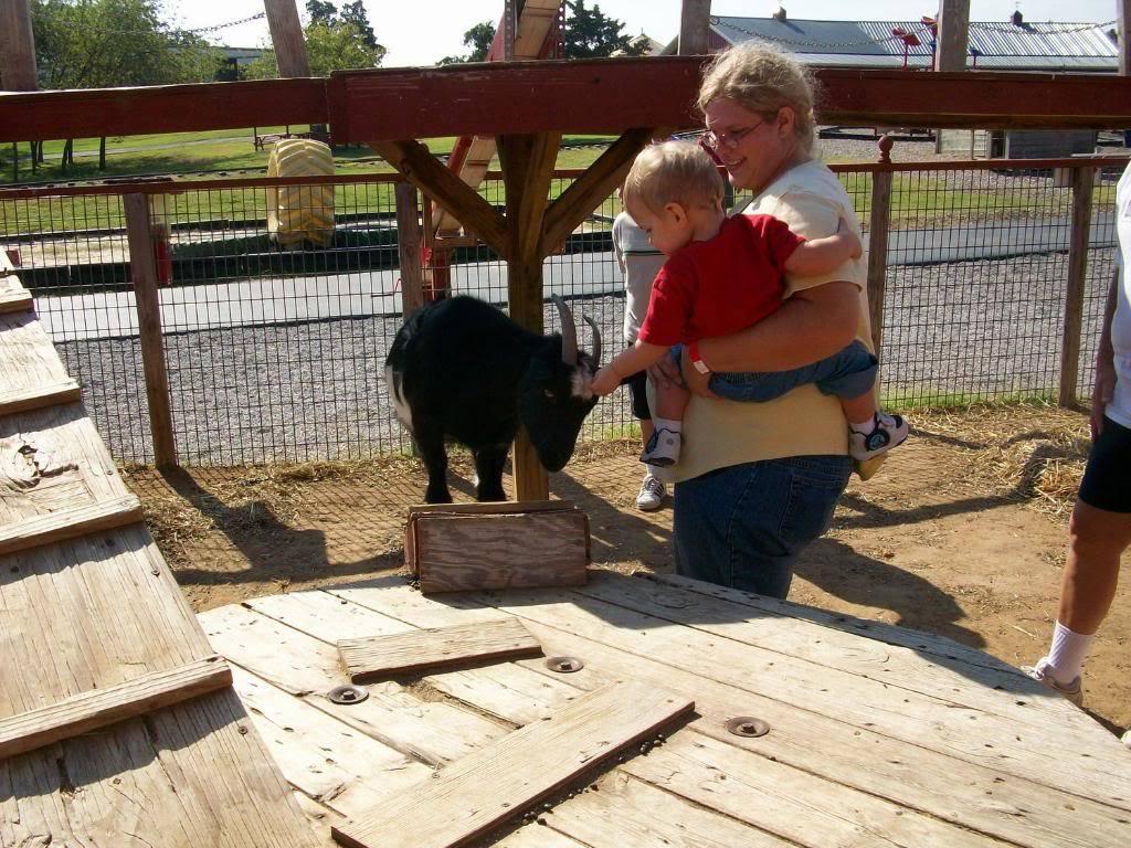 Miniature Goats 7
