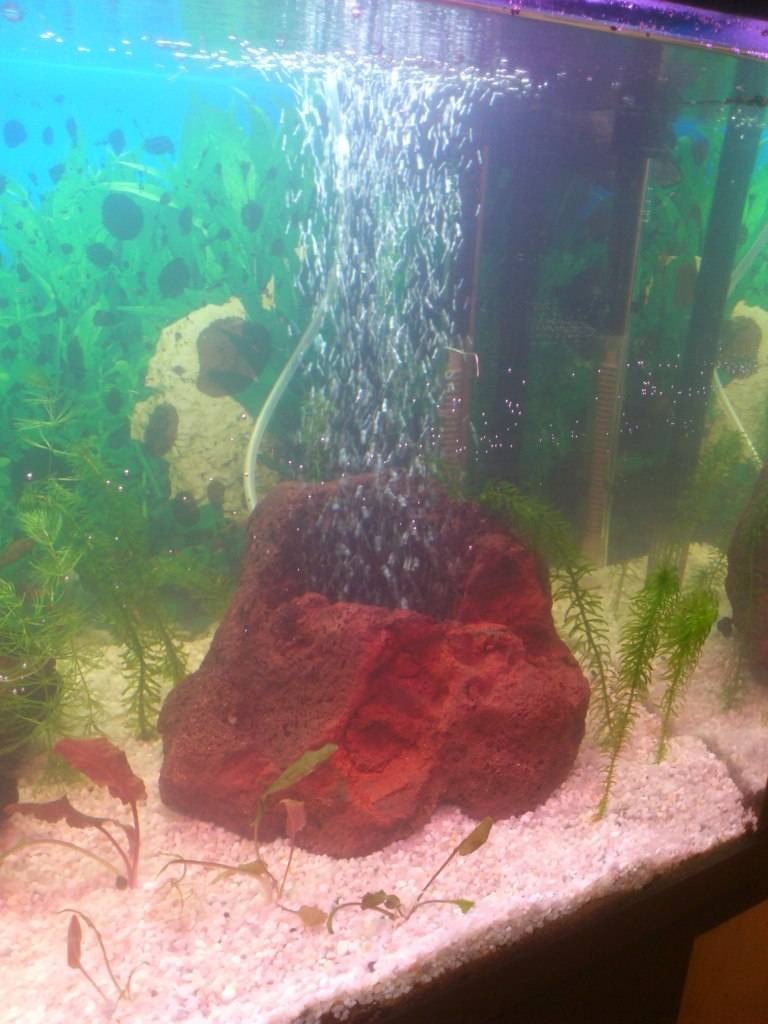 Futuro acuario - Página 2 AcuariosDiego21