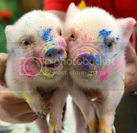 Gica (svinja) Gice