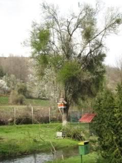 Babino - 12.04.2009 Babino138