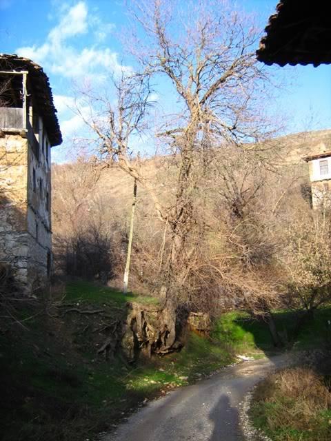 Скопска Црнагора... 7.01.2010 Bozik2010027