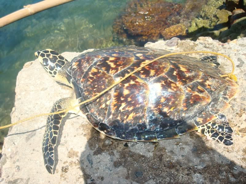 Gypsies........................... Seaturtle3