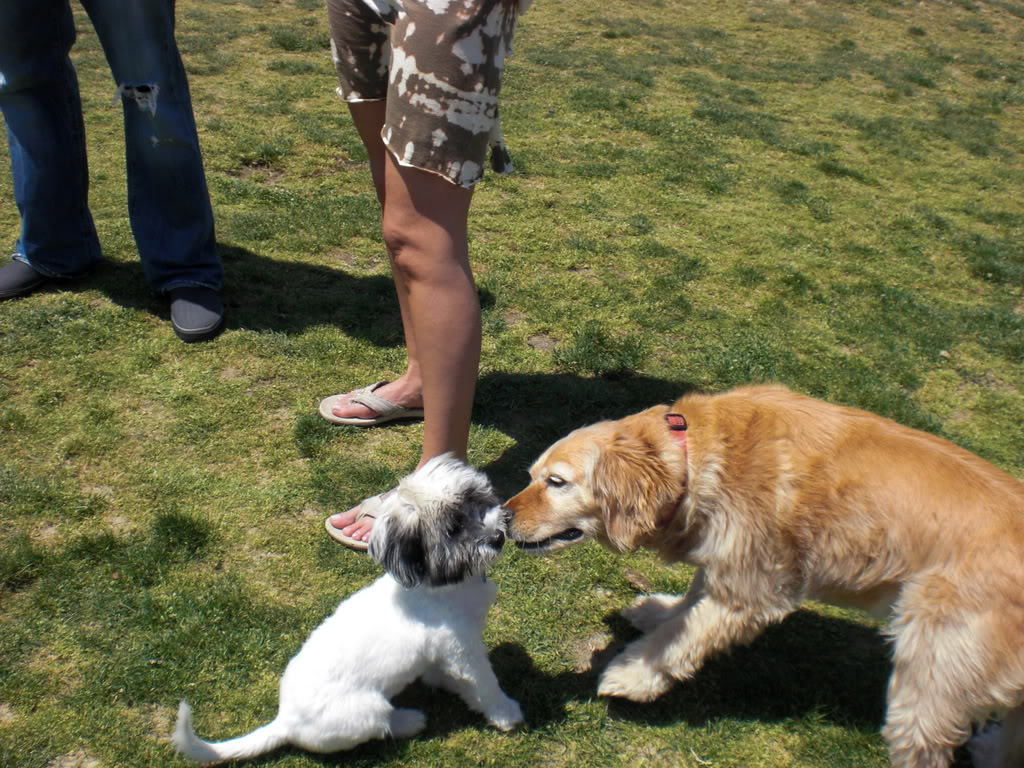 My dogs! <3 CIMG0079-1