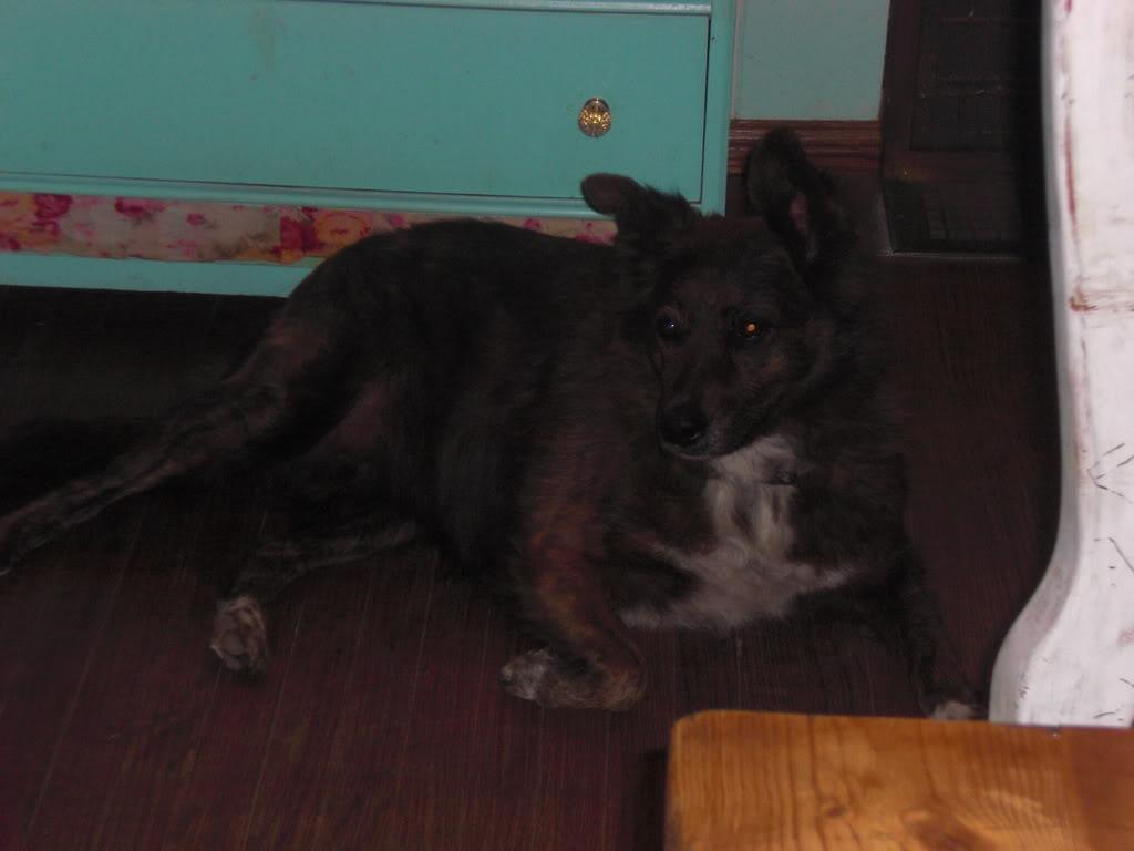 My dogs! <3 CIMG0866