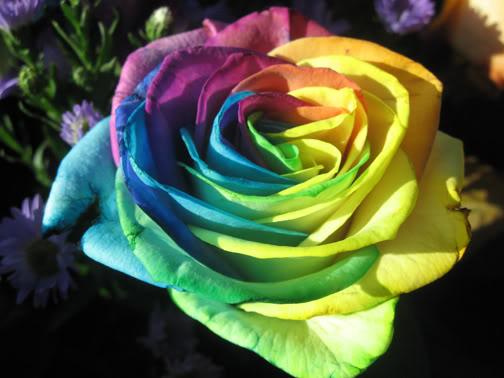 زهور جميله جداَ... 21202402879