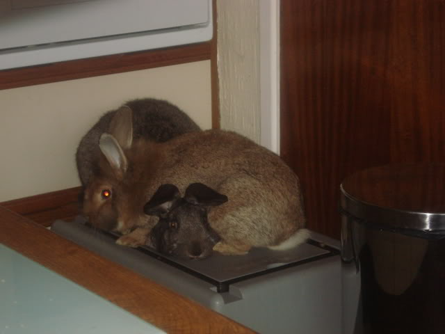 Forum Members Rabbits LolaandRory007