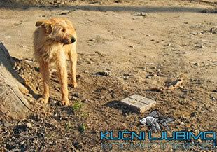 Psi lutalice spasili devojcicu 09905dd