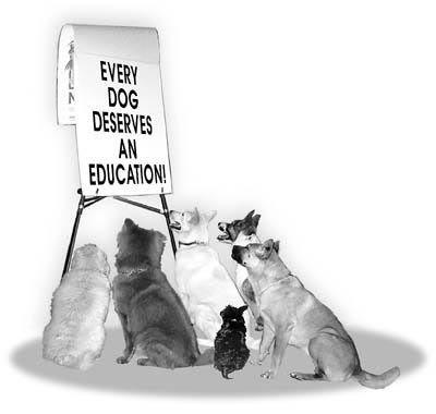 10 najcescih gresaka u obuci psa Education