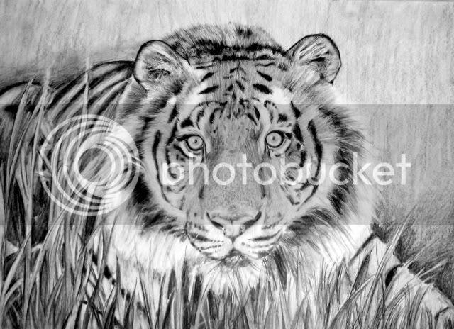 Sarah's Artwork - Page 6 Tiger-1