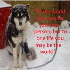 Stop Animal Abuse Banners 1250051ubjrls4xoe