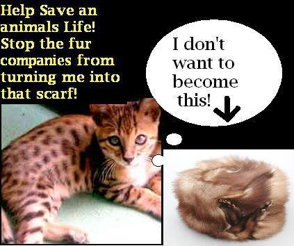 Stop Animal Abuse Banners 147795hyk6r2swf3