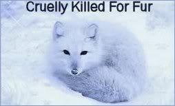 Stop Animal Abuse Banners Ckf