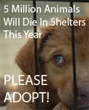 Stop Animal Abuse Banners Th5million