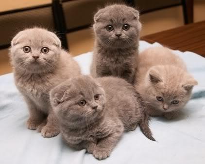 The Cute Image Thread KittensforLinda