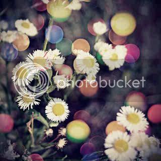 அழகிய மலர் காட்சிகள் (01) - Page 9 Flowers_need_bokeh_by_fhrankee-1