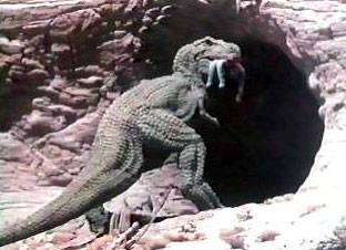 Planet of Dinosaurs (1978) PlanetofDinos
