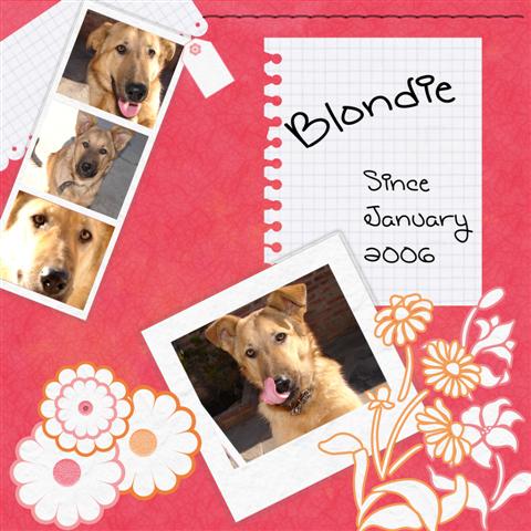 El post del fotografo, version animal BlondieSmall