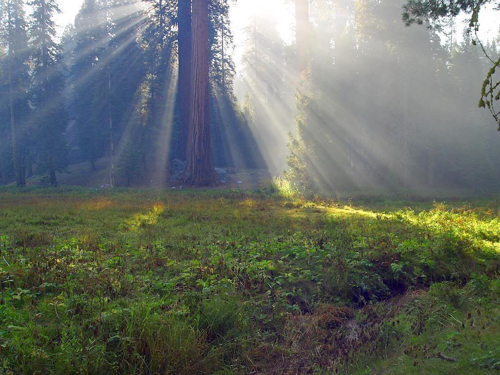 sequoiaMeadow.jpg Sequoia Meadow image by poetsloft7