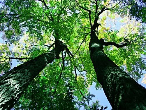 Trees 501x376_trees_635622