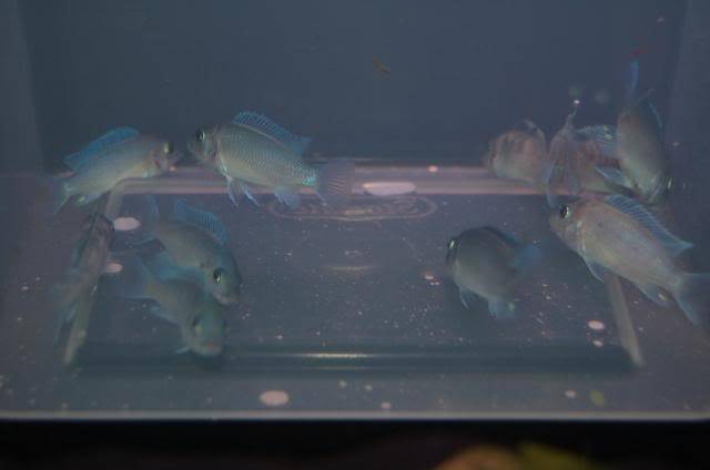 here are some pics of some of my fish DSC_0015-1