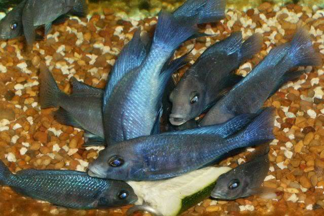 Blue Dolphins HPIM3085