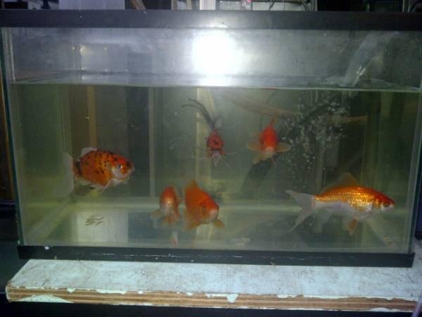 New members of the Benson Aquarium... IMG-20131129-00803_zps35641797
