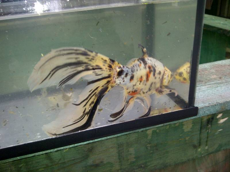 New members of the Benson Aquarium... Eb48d1df-b8ab-4ffc-a6e6-346aba124888_zpsdbaa481a
