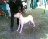 Ludhiana DogShow on 29 November 2009 Th_29112009006