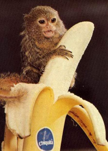 Happy Birthday Jane! Baby-monkey-with-banana