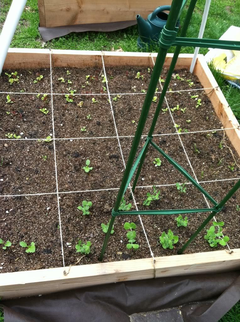 My Garden update and Pics 98d48b2c