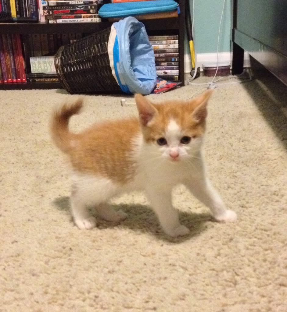 We got a new kitty PICS ADDED Photo_zpsd578ef80