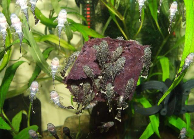 Seaweed Strips Sera-seaweed5