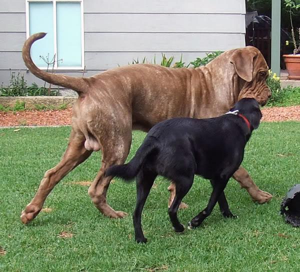 Back yard visitors 1st-April