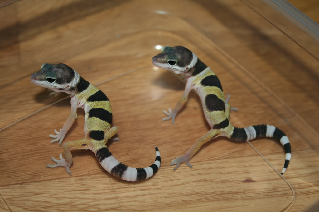 Some of my lizards :) IMG_9493