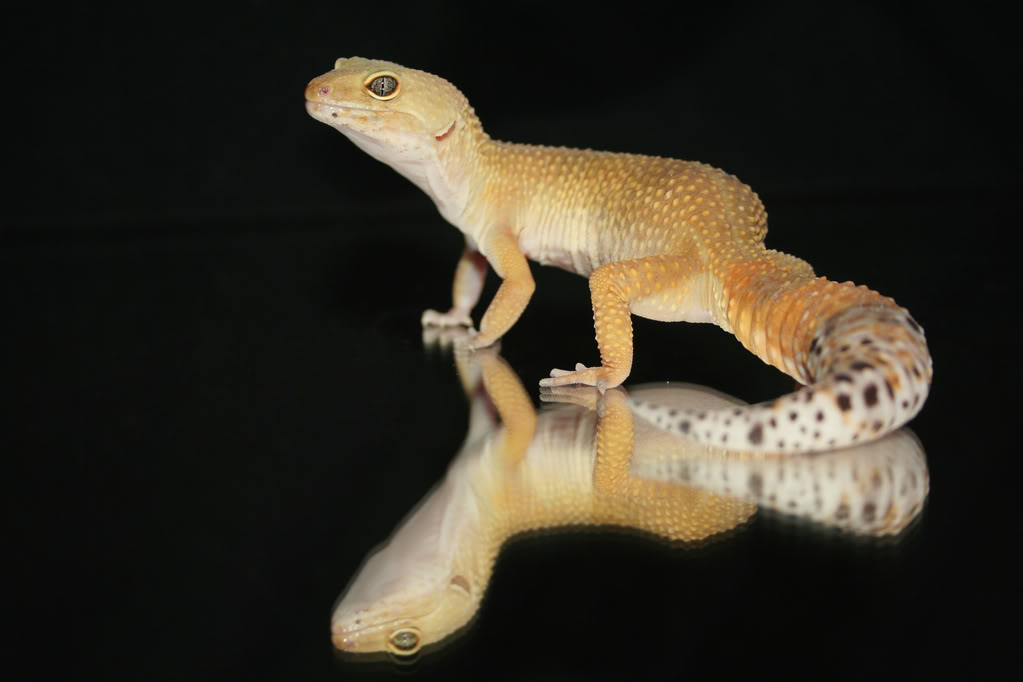 Some of my lizards :) IMG_9002