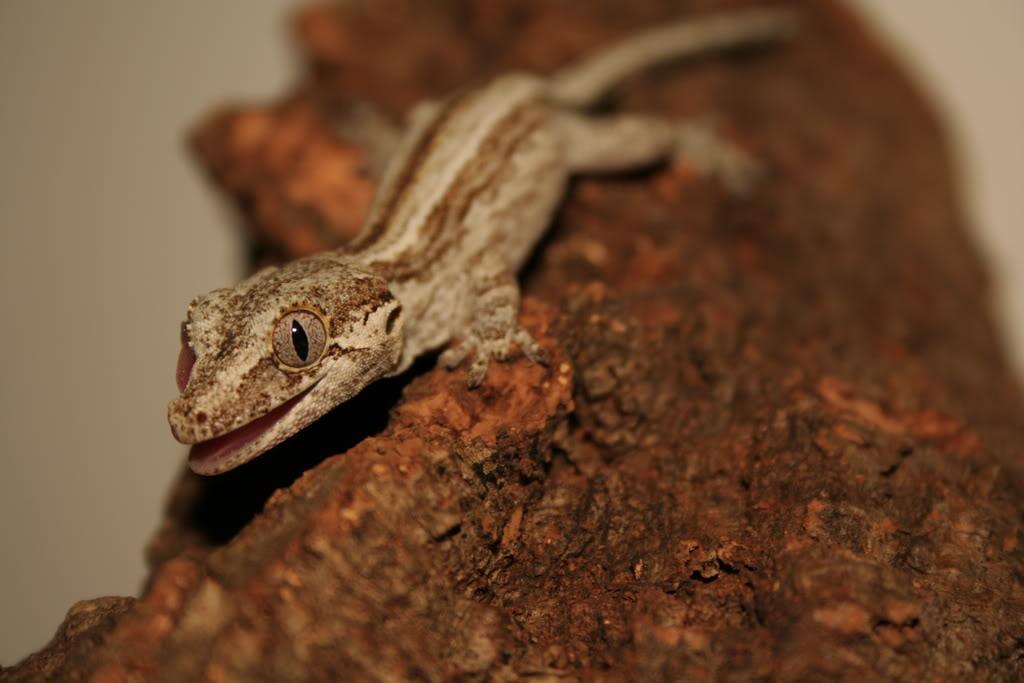 Some of my lizards :) Bilde140-1
