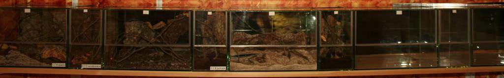 New terrariums! IMG_1675