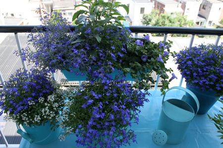 Nanno, my Blue Russian 'wannabe' (many photographs!) IMG_3201kp