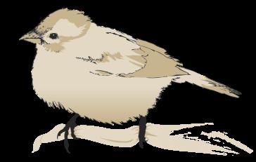 I N S P I R E - Page 2 Birdy